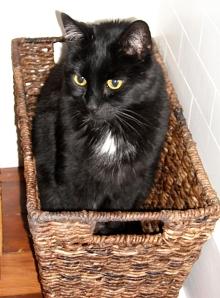 Merckx being a basket cat!