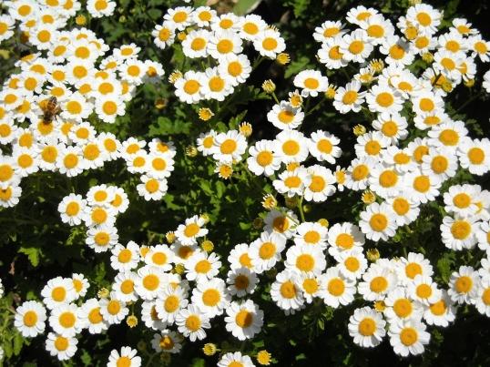Happy bee amongst the flowers