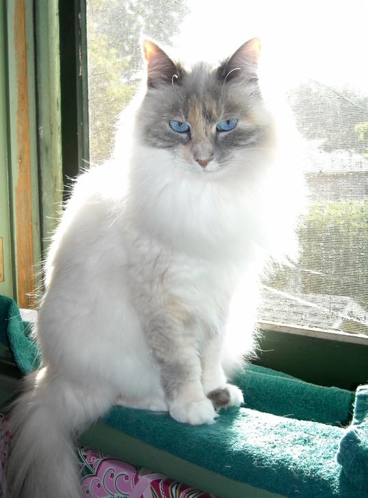 Wren in her favorite window
