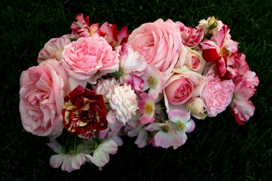 A charming collection of beautiful flowers!