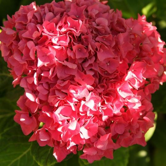 Love the big cluster of tiny petals!
