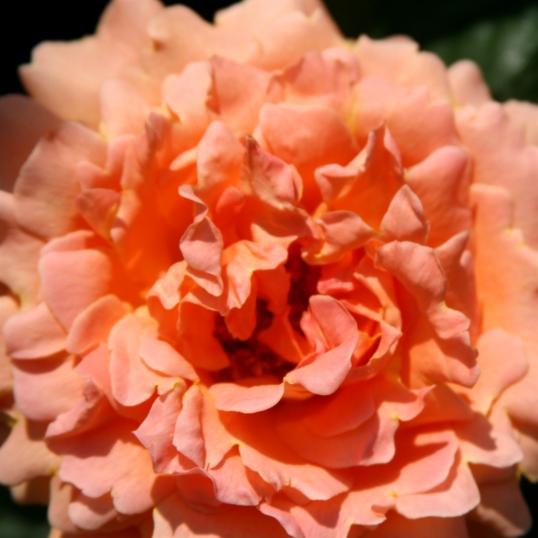 Very peachy!