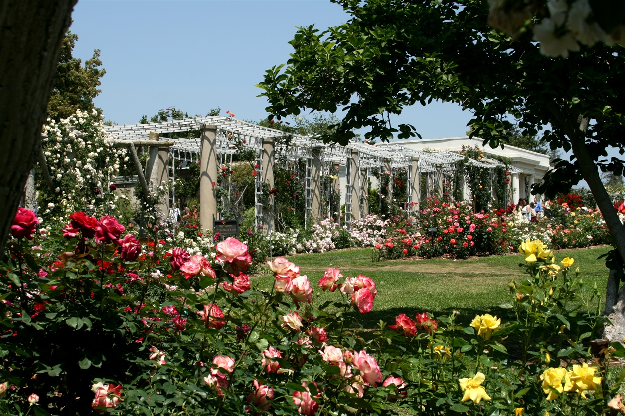 Most Beautiful Rose Gardens In The World Flowers Gallery
