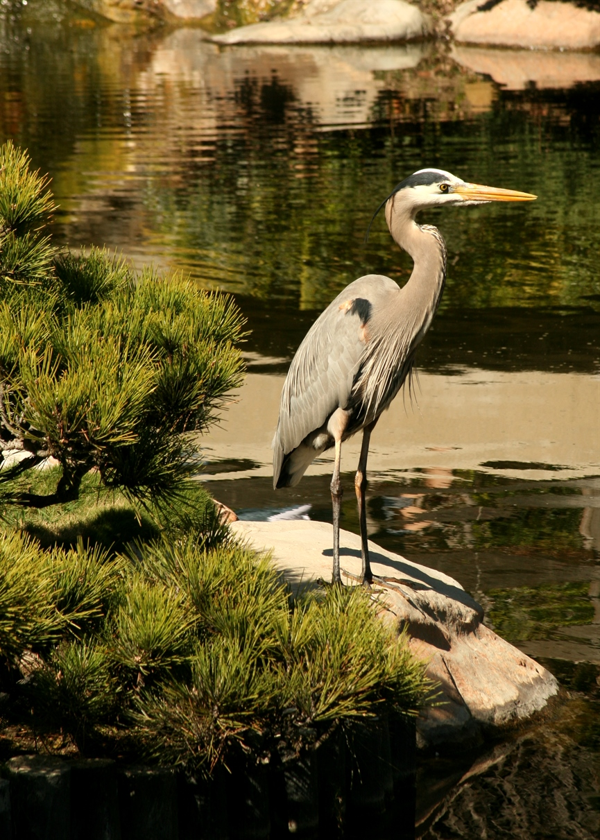 Photography Monday Earl Burns Miller Japanese Garden Crafted Living