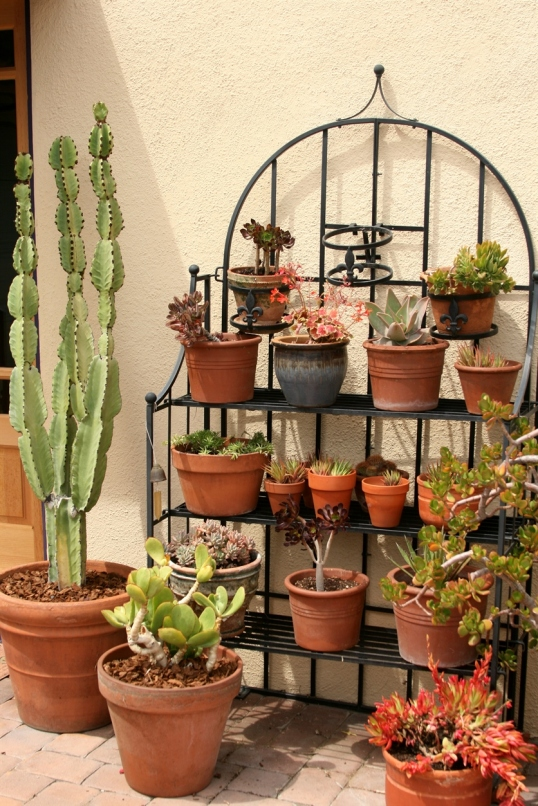 A great display idea for succulents!