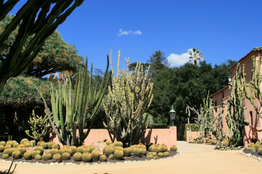 Masses of golden barrel cactus (Echinocactus grusonii) and large weeping Euphorbia ingens flank the entrance to the house.