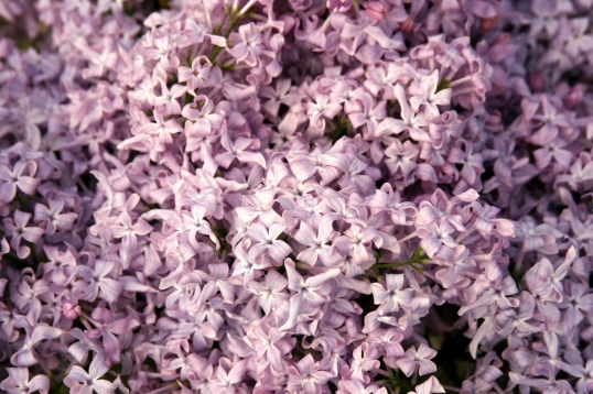 A delightful delicate scent perfumes the air.